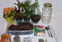 Houseplants, Terrariums and Indoor Gardening / by Marla Anson