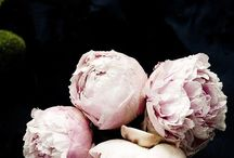 Les Fleurs / by Annie McCarthy