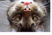 Cats / by Deborah Buck