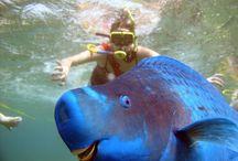 Blue parrotfish  / Def my favorite sea animal!!  / by morgan vangieson