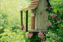 In my Garden / by Jodi Fardella