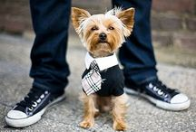Travel Wear ✈ Dog Clothes & Apparel / Expedia® CruiseShipCenters® ✈ Rachel Mellotte (360) 833-9479 ✈ www.rachelmellotte.cruiseshipcenters.com  / by Rachel Mellotte