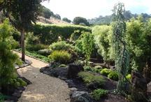 Garden / by Suzanne Bach