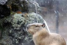 Interesting animals / by Carol Trujillo