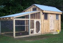 Chicken coops / by Cindy Rehberg