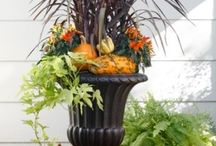 Fall home  / by Lorrie Stapor