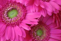 Beautiful Flowers / by Effie Smith