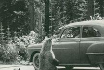 Road trip / by Dawn Dunnivant
