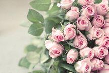 Roses / by Suwa Suwannapran