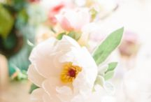 Beautifull Flowers / by susana valencia