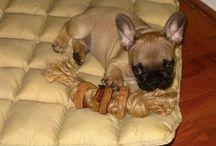 Doggy stuff / by Cindy Shultz