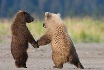 Bears / by Eufloria