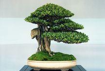 Beautiful Bonsai / by Judy Turner