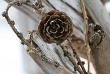 Cone + Wood Crafts / by L L