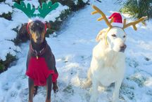 Candlelight Christmas Photo Contest  / Tag a holiday photo of your animal family for a chance to win a copy of my new book Candlelight Christmas! / by Susan Wiggs