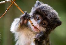 animals / by Rachel Getter
