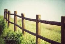 Fences / by Margo Bangert