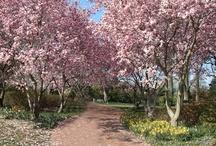 Trees of the Garden / by Missouri Botanical Garden