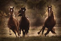 The Love of Horses / by Doreen Johnson