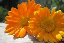 Orange / by Taryn Wilson