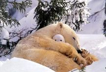 Bears / I Love Bears! / by Nancy Moore