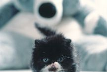 Persian cats <3 / by Marigold Scott