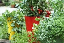 Gardening / Growing vegetables in containers / by Amy Wray