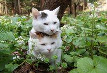 Cats / by Jojo