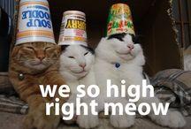 Pussycats / by Pauline Petro