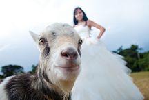 Goat stuff / by Abigayle Wilson