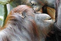 Monkeys / by Rooloo Bro