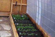 Gardening: Green/Hoop Houses, Cold Frames, etc. / by Debra Collins