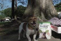 V-dogs! / by V-dog food