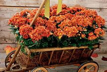 gardening / by Cristy Lentz Johnson