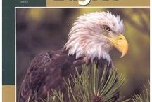 Decorah Eagles etc. / by Laurel Copeland