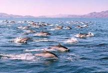 The Sea of Cortez / by Visit Baja California Sur