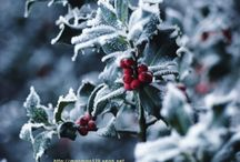winter solstice party ideas / by 'Julie Scott