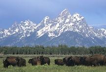 land, ranches and homes i want / by Barson Hethcox