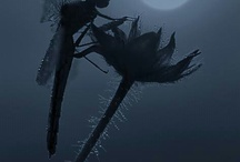 Dragonflies / In homage to my love for all things dragonfly. / by C.K. Snead