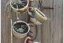 Garden / by Norma canez