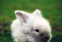 Bunnies / mostly other people's bunnies, some are my bunnies / by Justin Snow