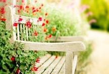 garden / by Marcia Alec