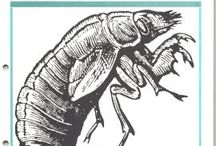 Entomology / by Urban Earthworm