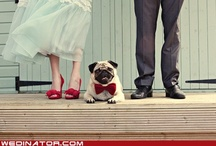 Pug Love / by Nicole K