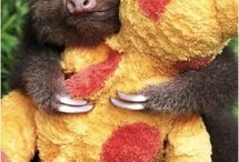 Sloths!! ♥ / by Jessica James