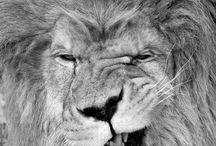 Roar / by Stephanie Elaine