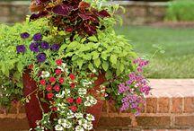 garden ideas / by Vickie McQueen