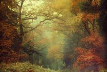 Seasons / by Mamma4earth