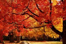 Fall Is In The Air At Hyatt Carmel Highlands / by Cindy Gutierrez