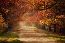 Beauty in Nature / by Rachel Steward